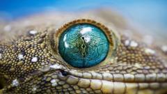 Lizard Wallpaper 21411
