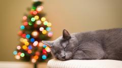 Lovely Cat Rest Wallpaper 43867