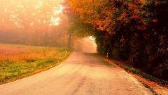 Lovely Morning Wallpaper 41455