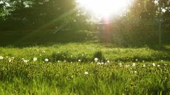 Lovely Spring Meadow Wallpaper 32097