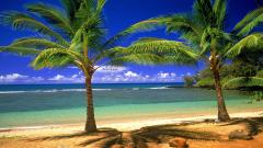 Lovely Tropical Wallpaper 25209