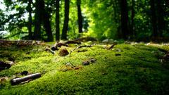 Nature 26208
