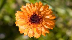 Orange Flower 19351