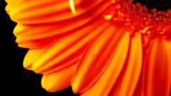 Orange Flower HD 19338