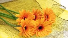 Orange Flowers 19348