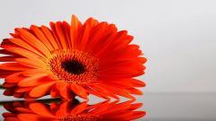 Orange Flowers 19353