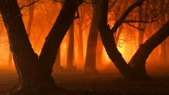 Orange Light 34818