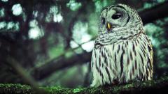 Owl Desktop Wallpaper 5908