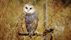 Owl 5911