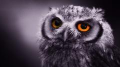 Owl 5925