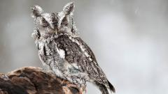 Owl 5928