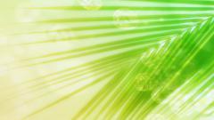 Palm Leaf Background 27163