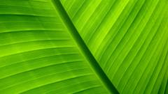 Palm Leaf Pictures 27161