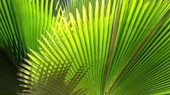 Palm Leaf Wallpaper 27156