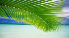 Palm Leaf Wallpaper 27159