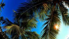 Palm Leaf Wallpaper 27162