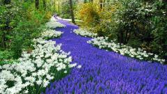 Perennial Flowers 14072