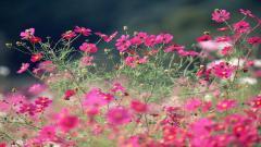 Perennial Flowers 14076