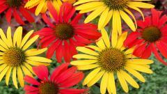 Perennial Flowers 14078