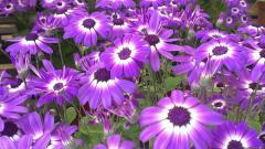 Perennial Flowers 14080