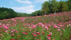 Pink Flower Meadow 20394
