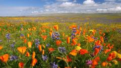 Pretty Flower Meadow 20387