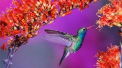Pretty Hummingbird Wallpaper 19956