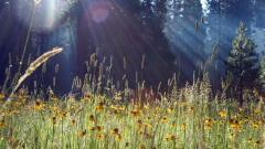 Pretty Spring Meadow Wallpaper 32113