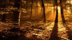 Pretty Woods Wallpaper 20371