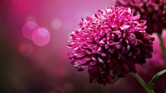 Purple Flowers 14061