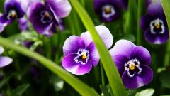 Purple Flowers 14064