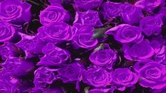 Purple Flowers 14067