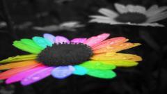 Rainbow Flower 17366