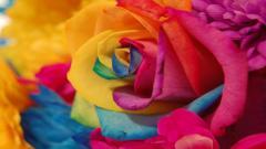 Rainbow Flowers 17361