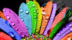 Rainbow Flowers 17362