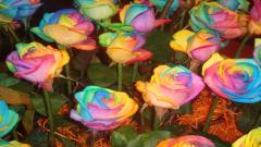 Rainbow Flowers 17368