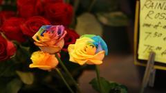 Rainbow Flowers 17371