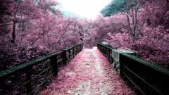 Sakura Wallpaper 20957