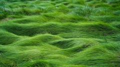 Seagrass Wallpaper 21923