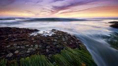 Seagrass Wallpaper 21924