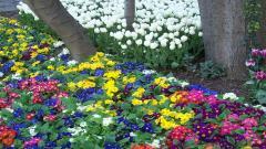 Spring Flowers 14115