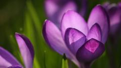 Spring Flowers 14120