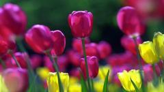 Spring Flowers 14122