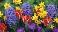 Spring Flowers 14127