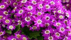 Spring Flowers 14129