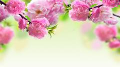 Spring Flowers 14130