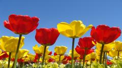 Spring Flowers 14132