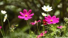 Spring Flowers 14133