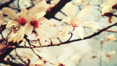 Spring Flowers 14136