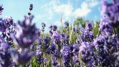 Spring Meadow Background 32098